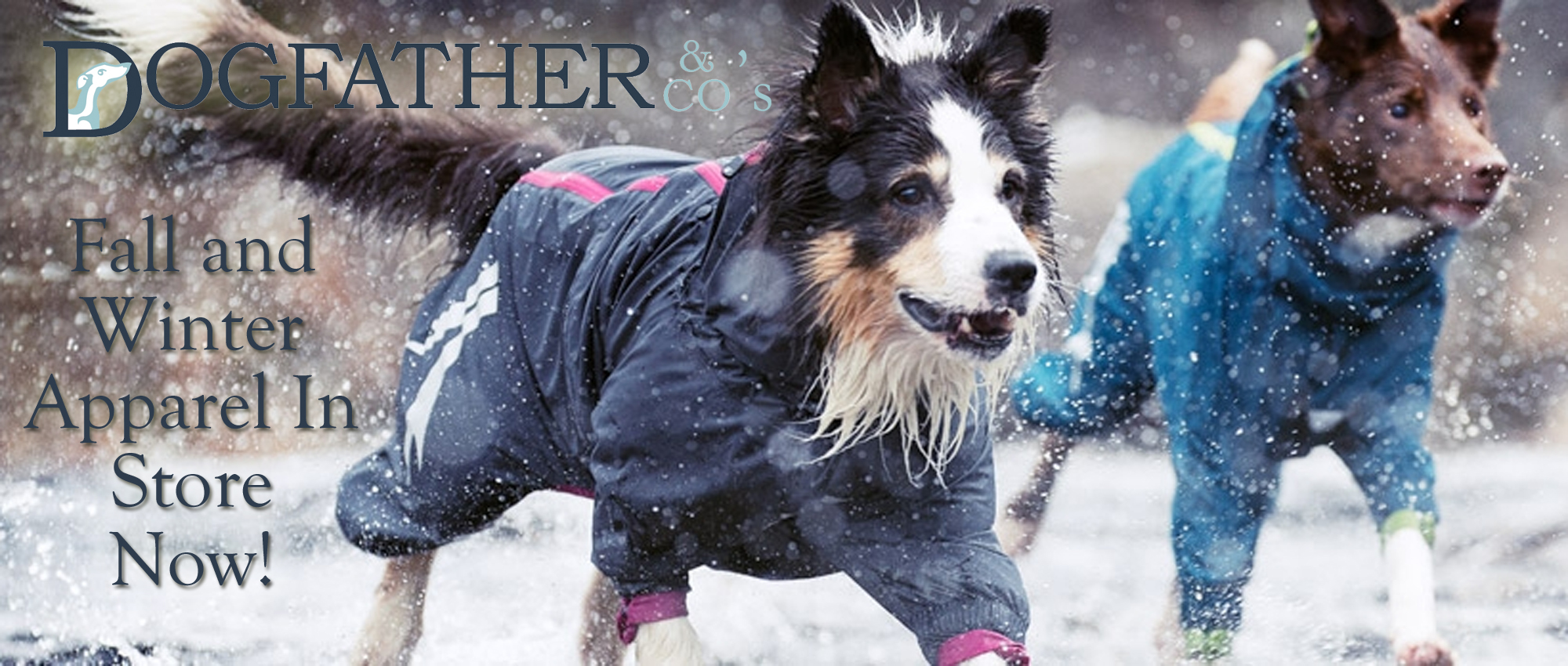 Winter Jackets Dogfather And Co Canine Retail And Dog Grooming