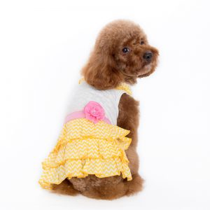 sunshine-chevron-dress-dog-10