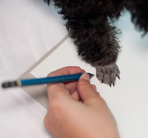 tracing a dogs paw