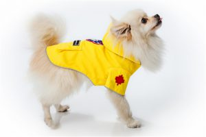 canada pooch torrential tracker yellow