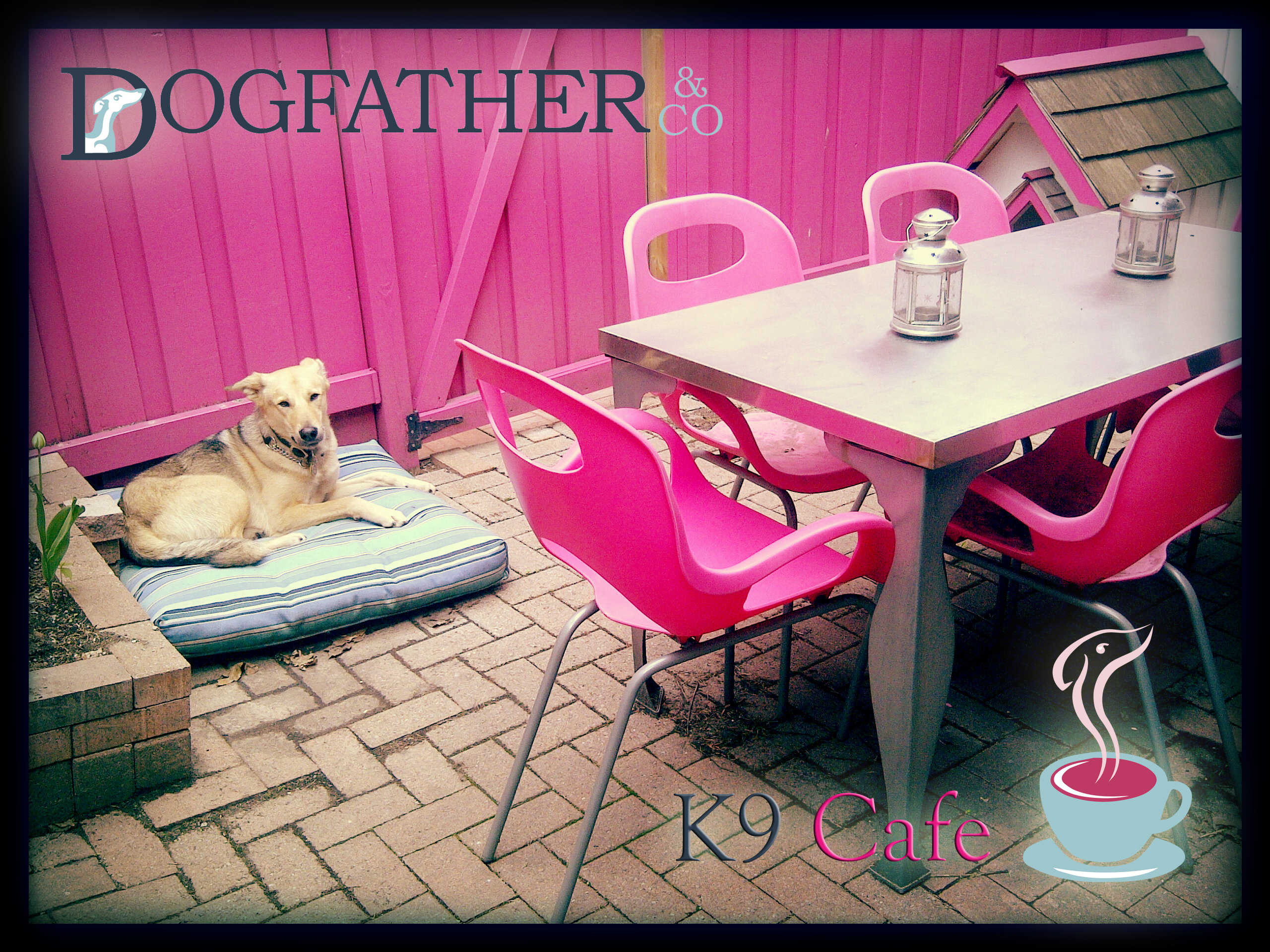 K9 Dog Caf 233 Dogfather And Co Canine Retail And Dog
