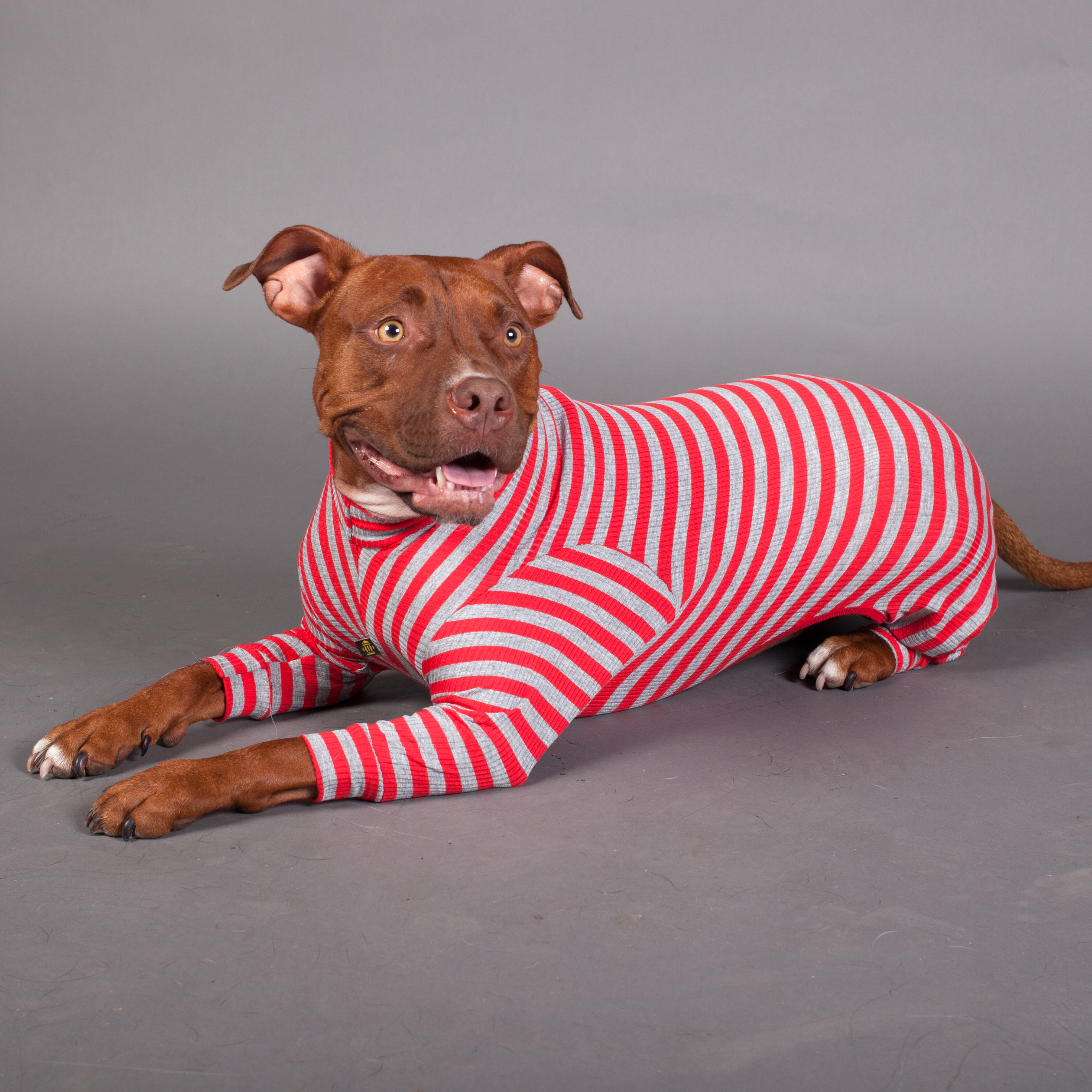 Onesies And Pyjamas For Dogs Dogfather And Co Canine