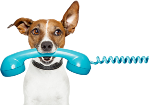 dog-blue-phone