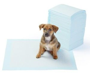 puppy on pee pad